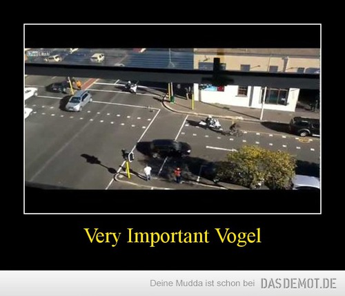 Very Important Vogel –