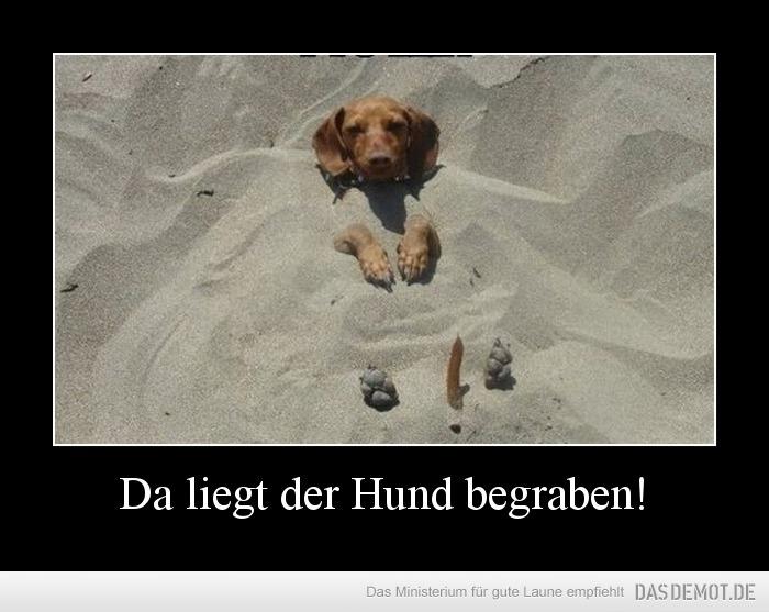 Hund Begraben