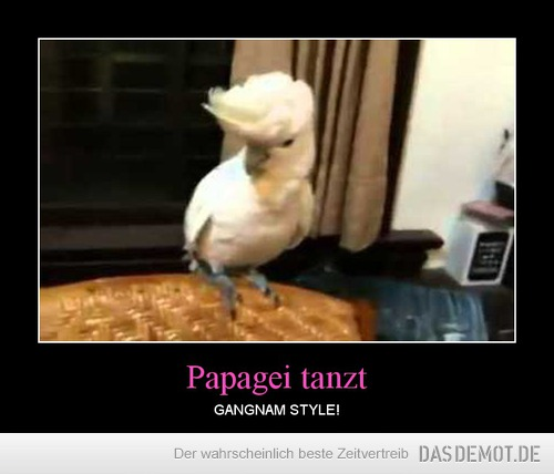 Papagei tanzt – GANGNAM STYLE!