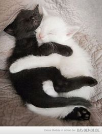 Yin and Yang –