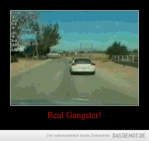 Real Gangster! –