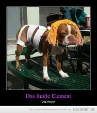 Das fünfte Element – Dog Version